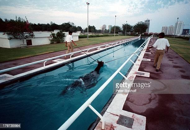Reise Dubai/Vereinigte Arabische Emirate Mittlerer Osten Asienindische Pferdepfleger Pferd TierWasserbecken