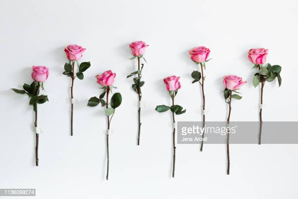 relationship goals, romance, romantic, love, forgiveness, making up, true love, thinking of you, valentine gift, i love you - pink flowers stock pictures, royalty-free photos & images