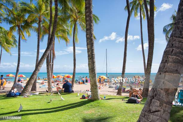 relax on the beach - waikiki stock pictures, royalty-free photos & images