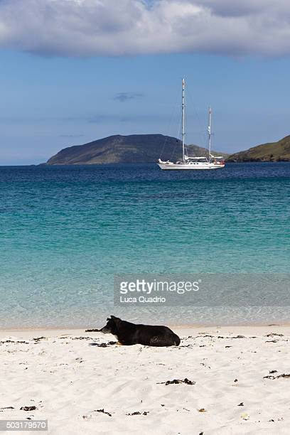 relax on vatersay beach - barra scotland stock pictures, royalty-free photos & images