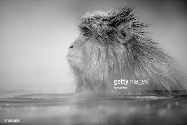 Relaxed monkey in hotsprings
