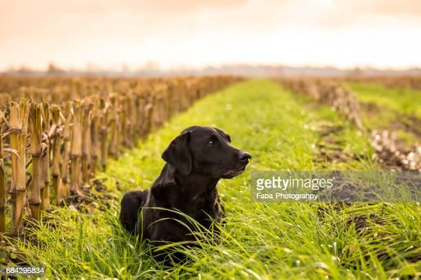Relaxing Dog