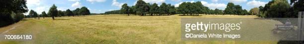 relaxing in the shade - リッチモンド公園 ストックフォトと画像