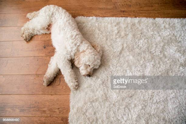 relaxing on the rug - wooden floor stock pictures, royalty-free photos & images