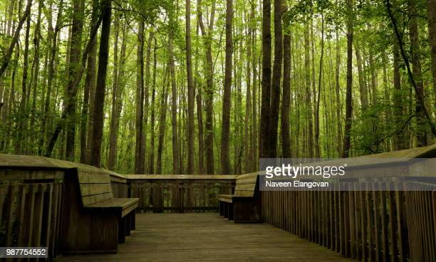 relaxing - bamboo forest stock photos and pictures