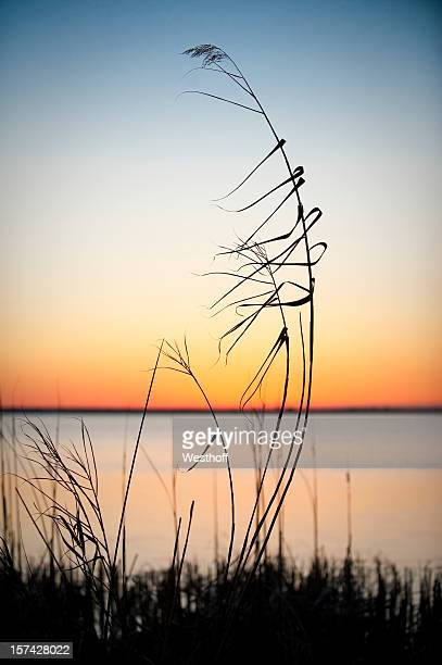 relaxing sunset - gulf shores alabama stock pictures, royalty-free photos & images