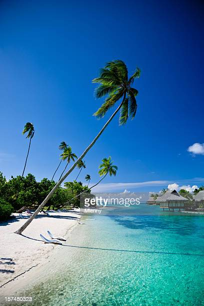 relaxing vacation on dream beach - tahiti stock pictures, royalty-free photos & images