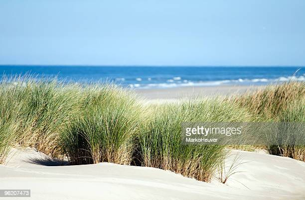 Relaxing view of dunes, grass, beach and sea