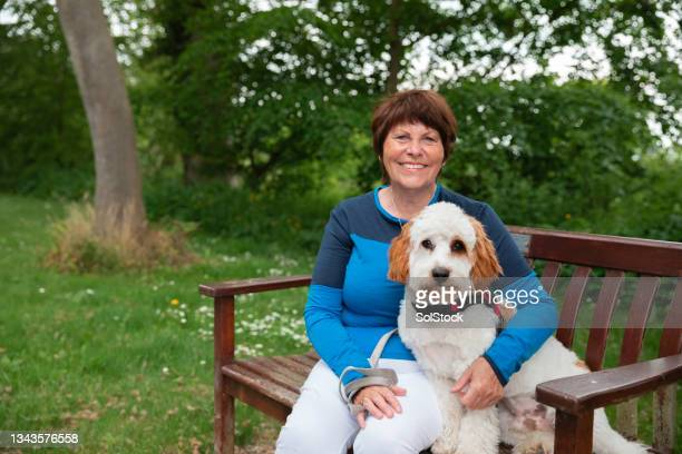 relaxing with her cavapoo on a walk - morpeth stock pictures, royalty-free photos & images