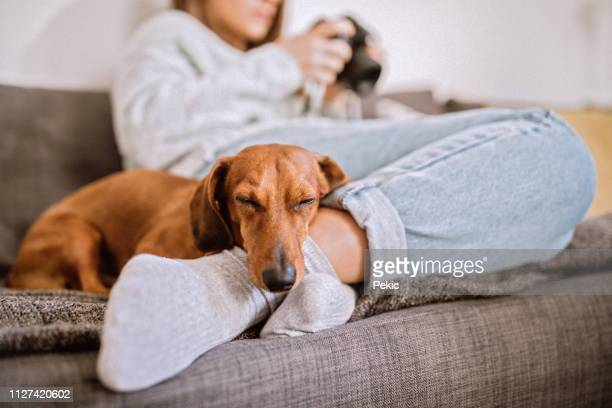 relaxing with her dachshund dog - pets foto e immagini stock