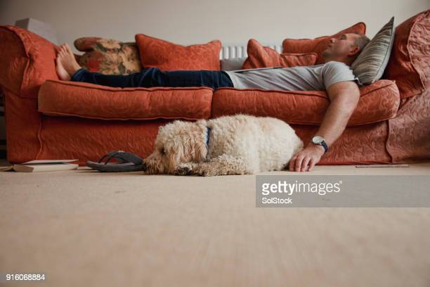 relaxing with the dog - sofa stock pictures, royalty-free photos & images
