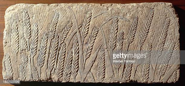 Relief carving showing wheat Egypt Ancient Egyptian 18th dynasty 1352 1336 BC Amarna period