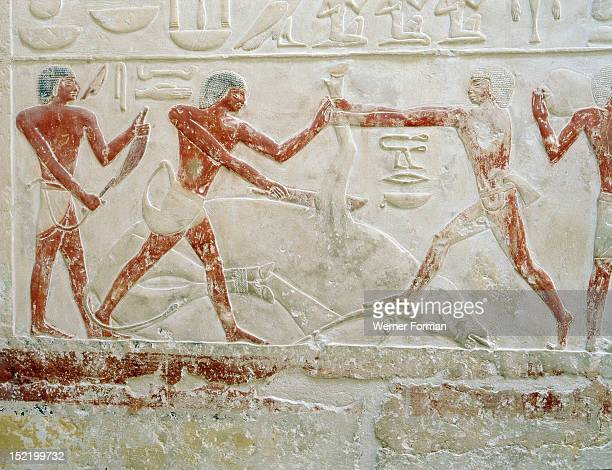 Relief in the tomb of Princess Sesh seshet Idut at Saqqara depicting the quartering of oxen, Egypt. Ancient Egyptian. 6th dynasty c 2345 2181 BC....