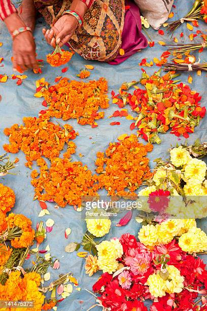 religious flower seller, kathmandu, nepal - peter adams stock pictures, royalty-free photos & images