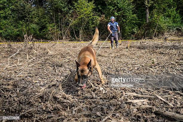 Relying on minedetecting dogs metal detectors and field expertise a demining unit from the humanitarian aid organization Norwegian People's Aid combs...