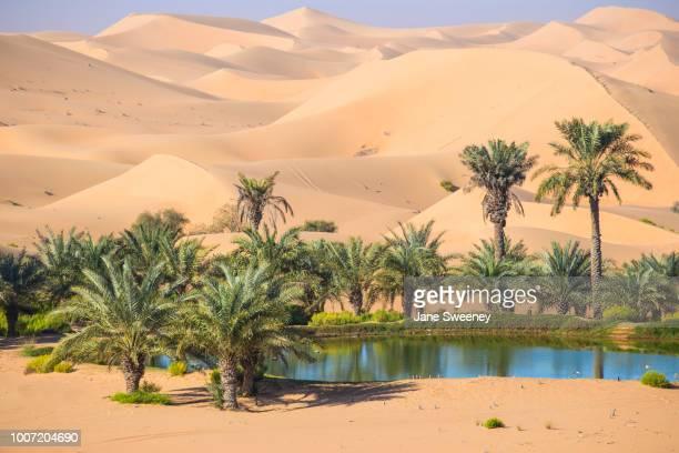 remah desert, al ain, abu dhabi, united arab emirates, middle east - oasis fotografías e imágenes de stock