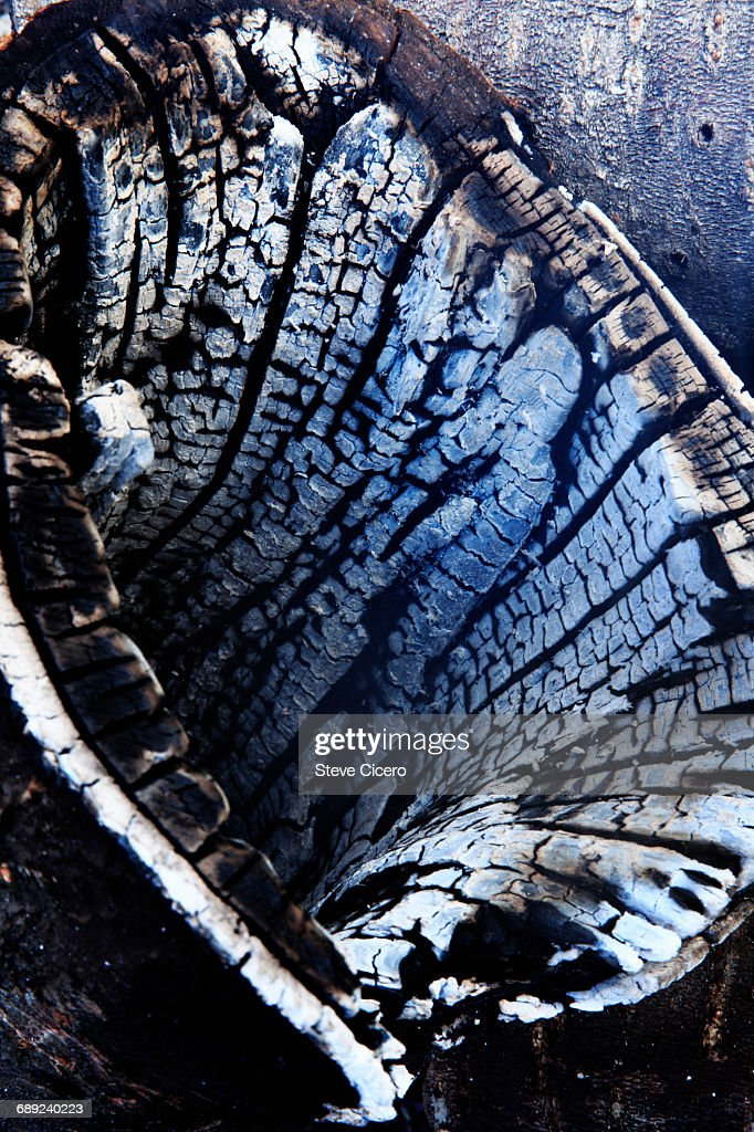 remains of burnt tree trunk : Stock Photo
