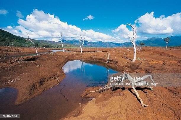 Remains of flooded trees near Yate Lake New Caledonia French Overseas Collectivity