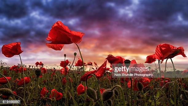 remembering - country geographic area stock pictures, royalty-free photos & images