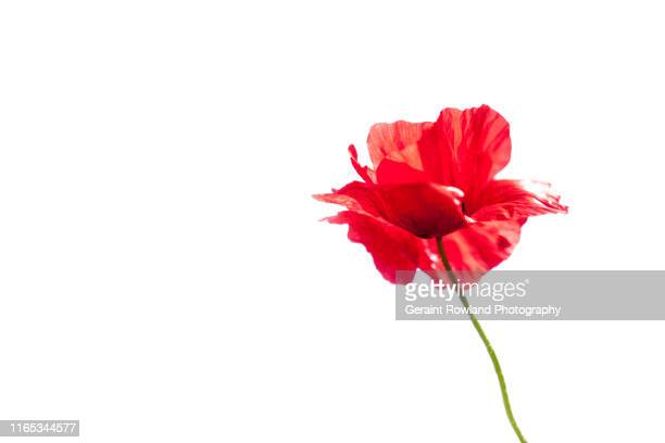 remembrance day - memorial day remembrance stock pictures, royalty-free photos & images