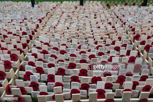 remembrance day, poppy and cross memorials for service personnel lost in wars - armistice day stock photos and pictures