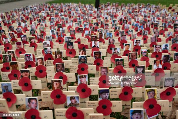 remembrance day, poppy and cross memorials for service personnel lost in wars - remembrance sunday stock pictures, royalty-free photos & images