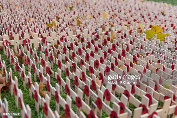 remembrance day, poppy and cross memorials for service personnel lost in wars - remembrance day stock photos and pictures