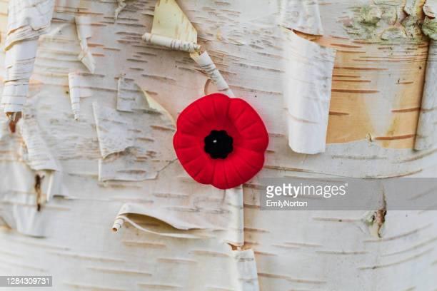 papoula do dia da lembrança - dia do armistício - fotografias e filmes do acervo