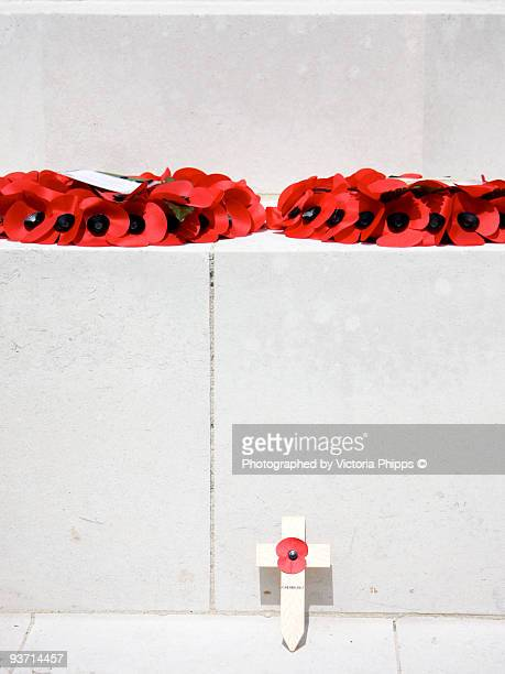 remembrance - oriental poppy stock pictures, royalty-free photos & images