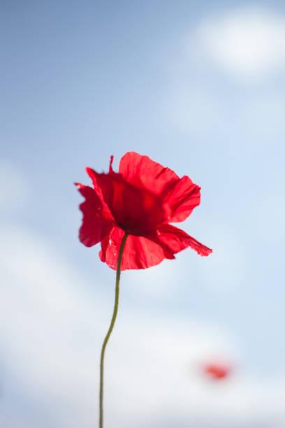 Remembrance Sunday, England