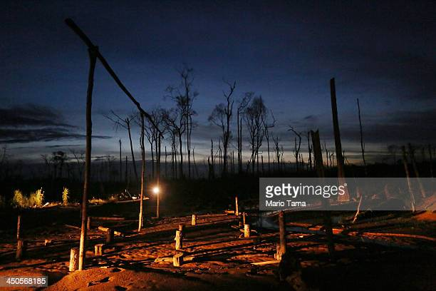 Remnants of trees remain in a deforested area ravaged by gold mining in the Amazon lowlands on November 17 2013 in Madre de Dios region Peru The...