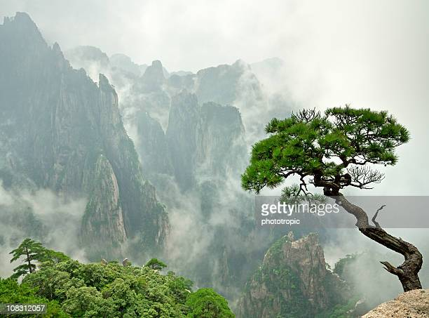 remote huangshan pine - chinese culture stock pictures, royalty-free photos & images