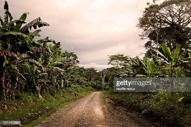 A remote jungle road