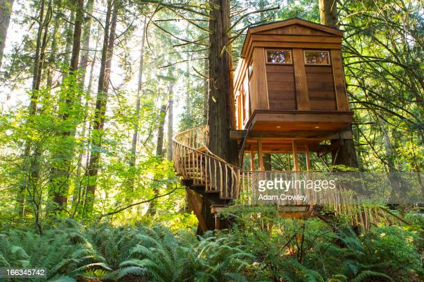 Remote tree house in forest