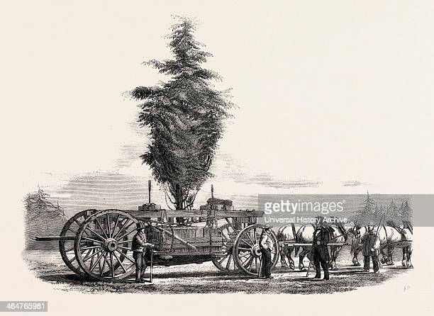 Removal Of A Large Tree From Chiswick To The New Gardens Of The Horticultural Society At South Kensington London UK 1860 Engraving
