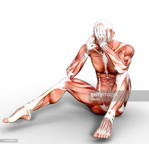 3d render depicting the anatomy of a human muscular system. - human muscle stock pictures, royalty-free photos & images