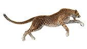 3D Rendering Big Cat Cheetah
