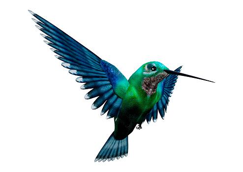3D rendering humming bird on white 861252344