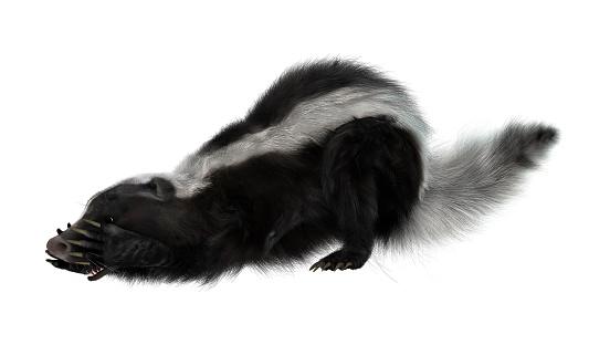 3D Rendering Skunk on White 825207320