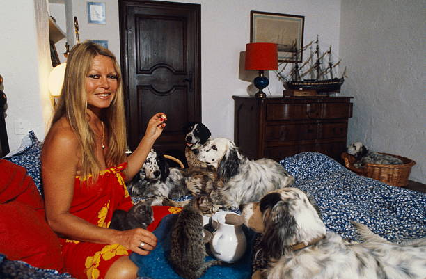 rendezvous with brigitte bardot on holiday in saint tropez pictures getty images. Black Bedroom Furniture Sets. Home Design Ideas