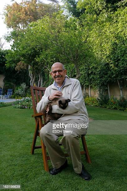 Rendezvous With Mohamed Elbaradei. Le prix Nobel de la paix 2005, Mohamed EL BARADEI posant avec son chat dans la jardin de sa maison du Caire. Avril...