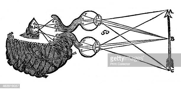 Rene Descartes' idea of vision showing the function of the eye optic nerve and brain 1692 From Opera Philosophica by Rene Descartes Originally...