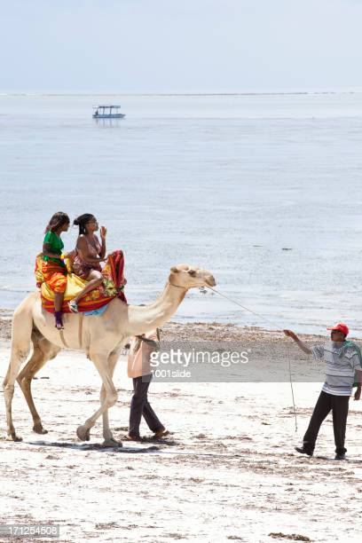 rental camels at beach - mombasa stock photos and pictures