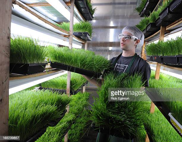 REO404/07/08146001Rick Eglinton Toronto StarToronto Sprouts Feature Story on small company with indoor growing operation Sprouts that are now being...