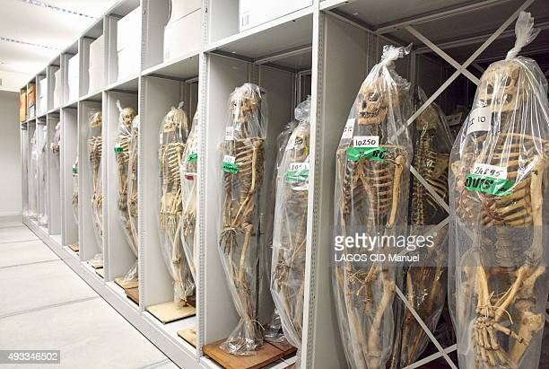 Reopening of the Musee de L'Homme in Paris after six years of work; September 23, 2015. Collection of skeletons stored in the reserves.