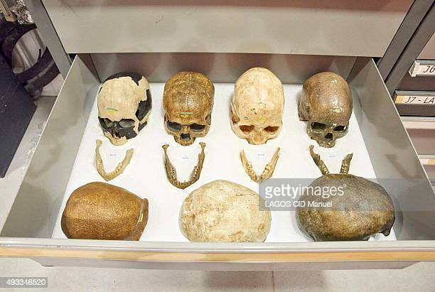 Reopening of the Musee de L'Homme in Paris after six years of work; September 23, 2015. Skulls and jaws in a drawer of the reserves.
