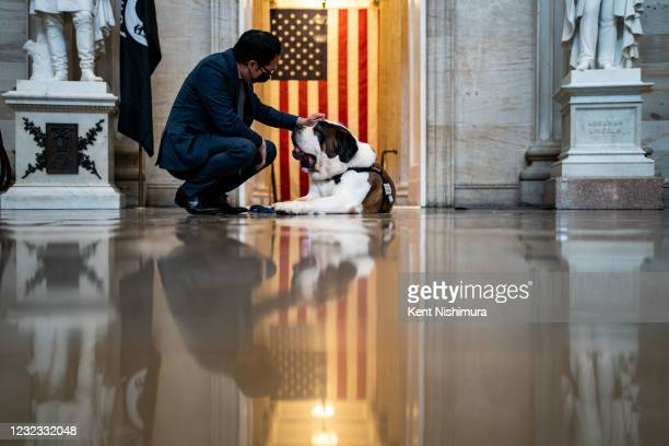 Rep. Andy Kim pets Officer Clarence, a Saint Bernard with the Greenfield Police Department in the Rotunda of the U.S. Capitol Building on Thursday,...