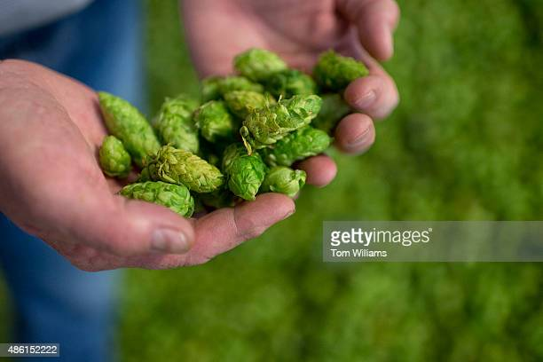 Rep Dan Newhouse RWash inspects hops on his farm that also grows grapes and fruit trees outside of Sunnyside Wash August 27 2015 About 79 percent of...