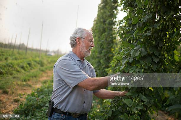 Rep. Dan Newhouse, R-Wash., inspects hops on his farm that also grows grapes and fruit trees, outside of Sunnyside, Wash., August 27, 2015. About 79...