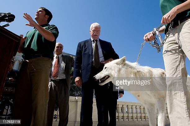 US Rep George Miller joined by Rodger Schlickeisen President Defenders of Wildlife other wildlife experts and an Arctic wolf at a press conference to...